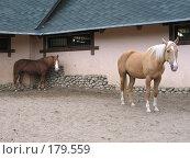Купить «Лошади», фото № 179559, снято 29 июля 2006 г. (c) Юлия Подгорная / Фотобанк Лори