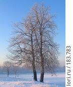 Купить «Зимнее дерево», фото № 183783, снято 25 декабря 2004 г. (c) Юлия Подгорная / Фотобанк Лори