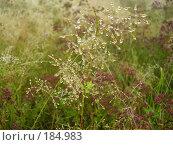 Купить «Луговые травы после дождя», фото № 184983, снято 16 августа 2007 г. (c) Иванова Наталья / Фотобанк Лори