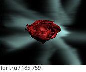 Купить «Цветок розы», иллюстрация № 185759 (c) Дмитрий Глебов / Фотобанк Лори