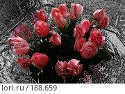 Купить «Цветы», фото № 188659, снято 11 ноября 2006 г. (c) Юлия Севастьянова / Фотобанк Лори