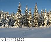 Зимний лес. Стоковое фото, фотограф Anna Marklund / Фотобанк Лори