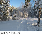 Лыжная прогулка. Стоковое фото, фотограф Anna Marklund / Фотобанк Лори
