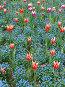 Тюльпаны, фото № 191955, снято 7 мая 2006 г. (c) Светлана Шушпанова / Фотобанк Лори