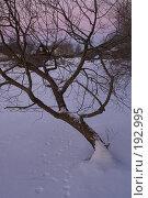 Купить «Неведомые следы», фото № 192995, снято 4 января 2008 г. (c) Смирнова Лидия / Фотобанк Лори