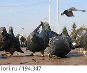 Купить «Завтрак на мостовой», фото № 194347, снято 20 октября 2007 г. (c) Беликов Вадим / Фотобанк Лори