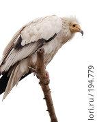 Купить «Птица», фото № 194779, снято 23 октября 2018 г. (c) Юлия Нечепуренко / Фотобанк Лори