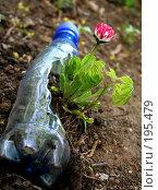 Купить «Маргаритка в пластике», фото № 195479, снято 10 мая 2007 г. (c) Павлова Татьяна / Фотобанк Лори