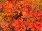 Яркие осенние листья, фото № 195839, снято 13 ноября 2004 г. (c) Иван Сазыкин / Фотобанк Лори
