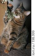 Купить «Кошка ест цветы», эксклюзивное фото № 198999, снято 7 февраля 2008 г. (c) Виктор Тараканов / Фотобанк Лори