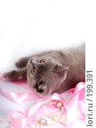 Купить «Серый котенок британской породы», фото № 199391, снято 29 мая 2007 г. (c) Ольга С. / Фотобанк Лори