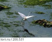 Купить «Зарисовка на тему моря», фото № 200531, снято 27 апреля 2007 г. (c) Борис Ганцелевич / Фотобанк Лори