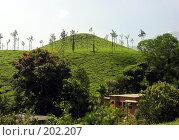 Купить «На фоне плантаций индийского чая», фото № 202207, снято 16 ноября 2005 г. (c) Марина Бандуркина / Фотобанк Лори