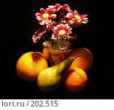 Купить «Натюрморт хризантемы с фруктами», эксклюзивное фото № 202515, снято 20 января 2008 г. (c) lana1501 / Фотобанк Лори