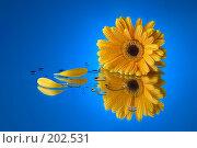 Купить «Голубой и желтый», фото № 202531, снято 27 мая 2018 г. (c) Григорий Сухарев / Фотобанк Лори