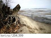 Купить «Бердский залив», фото № 204399, снято 17 апреля 2004 г. (c) Олег Кугаев / Фотобанк Лори