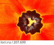 Купить «Цветы», фото № 207699, снято 14 мая 2007 г. (c) Александр Бербасов / Фотобанк Лори
