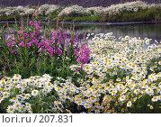 Купить «Цветник», фото № 207831, снято 17 июля 2005 г. (c) Егорова Елена / Фотобанк Лори