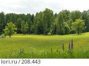 Купить «Таинственная поляна», фото № 208443, снято 16 июня 2006 г. (c) Александр Буровцев / Фотобанк Лори