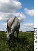 Купить «Пасущаяся лошадь», фото № 208571, снято 23 июня 2007 г. (c) Михаил Браво / Фотобанк Лори