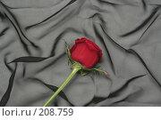 Купить «Одна красная роза на черном фоне», фото № 208759, снято 15 января 2008 г. (c) Останина Екатерина / Фотобанк Лори