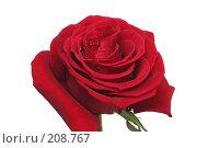 Купить «Одна красная роза на белом фоне», фото № 208767, снято 15 января 2008 г. (c) Останина Екатерина / Фотобанк Лори