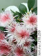 Купить «Букет хризантем», фото № 210259, снято 27 ноября 2007 г. (c) Игорь Дашко / Фотобанк Лори