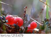 Клюква. Стоковое фото, фотограф Андрей Явнашан / Фотобанк Лори