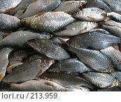 Купить «Много рыбы», фото № 213959, снято 2 февраля 2008 г. (c) Dmitriy Andrushchenko / Фотобанк Лори
