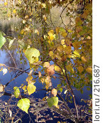 Купить «Осень», фото № 216687, снято 19 сентября 2018 г. (c) ElenArt / Фотобанк Лори