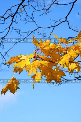 Купить «Осенняя листва», фото № 216695, снято 17 августа 2018 г. (c) ElenArt / Фотобанк Лори