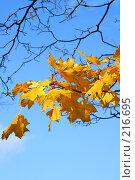 Купить «Осенняя листва», фото № 216695, снято 19 сентября 2018 г. (c) ElenArt / Фотобанк Лори