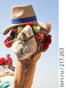Купить «Африканский верблюд», фото № 217263, снято 5 сентября 2007 г. (c) hunta / Фотобанк Лори