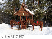 Купить «Две коричневые лошади, привязанные к колодцу», фото № 217907, снято 3 февраля 2008 г. (c) Карасева Екатерина Олеговна / Фотобанк Лори