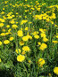 Желтые одуванчики, фото № 218055, снято 24 апреля 2017 г. (c) ElenArt / Фотобанк Лори