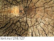 Купить «Древесная текстура», фото № 218127, снято 20 февраля 2020 г. (c) ElenArt / Фотобанк Лори