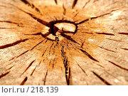 Купить «Дерево. Текстура», фото № 218139, снято 20 февраля 2020 г. (c) ElenArt / Фотобанк Лори