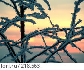 Купить «Зимний закат», фото № 218563, снято 23 января 2019 г. (c) ElenArt / Фотобанк Лори