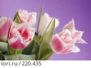 Купить «Тюльпаны», фото № 220435, снято 5 марта 2008 г. (c) Лифанцева Елена / Фотобанк Лори
