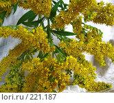 Купить «Желтые мелкие цветки», фото № 221187, снято 3 сентября 2006 г. (c) Маргарита Лир / Фотобанк Лори