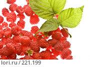 Купить «Малина», фото № 221199, снято 22 июля 2005 г. (c) Кравецкий Геннадий / Фотобанк Лори