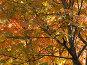 Осень, фото № 222211, снято 27 июля 2017 г. (c) Нурулин Андрей / Фотобанк Лори