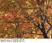 Купить «Осень», фото № 222211, снято 18 апреля 2018 г. (c) Нурулин Андрей / Фотобанк Лори