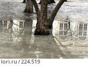 Весна. Стоковое фото, фотограф Карасева Екатерина Олеговна / Фотобанк Лори