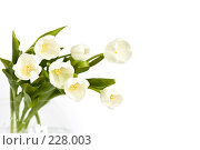 Купить «Букет белых тюльпанов в вазе», фото № 228003, снято 8 марта 2008 г. (c) Ольга Хорькова / Фотобанк Лори