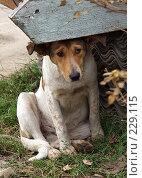 Купить «Тоска», фото № 229115, снято 7 октября 2006 г. (c) Юрий Назаров / Фотобанк Лори
