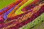 Цветочный фон, фото № 229915, снято 28 августа 2005 г. (c) Кравецкий Геннадий / Фотобанк Лори