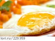 Купить «Яйцо», фото № 229959, снято 18 июля 2005 г. (c) Кравецкий Геннадий / Фотобанк Лори