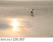 Купить «На закате», фото № 230307, снято 19 июня 2007 г. (c) Книжников Борис / Фотобанк Лори
