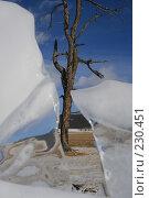 Купить «Дерево между льдинами», фото № 230451, снято 5 марта 2007 г. (c) Артемьев Андрей / Фотобанк Лори